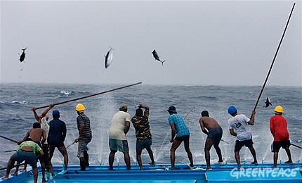 Bait boat adventures the last ocean project for Tuna fishing pole